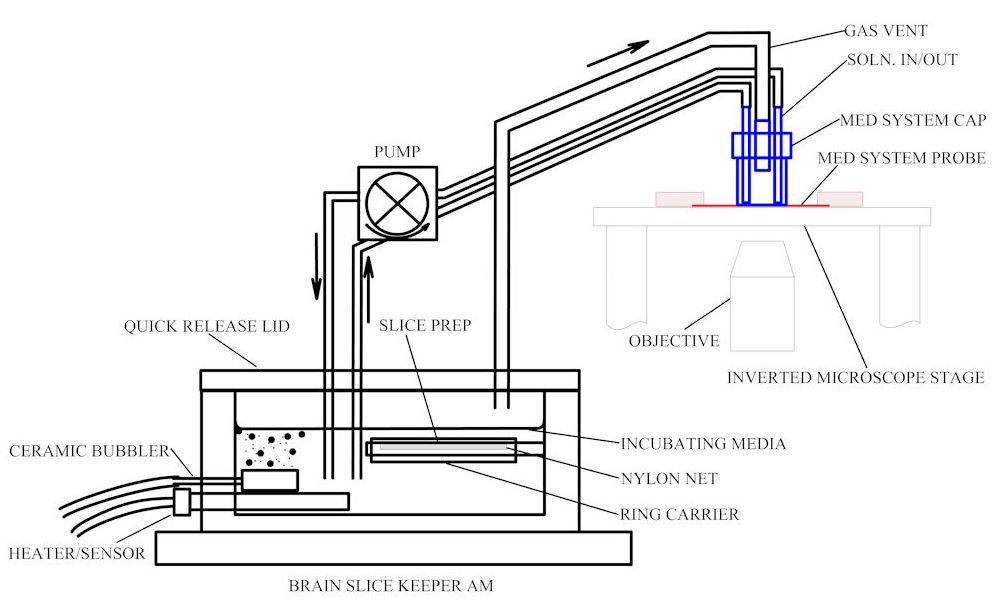 BSK-am schematicA